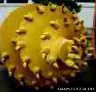 Двухзаходная шнекобурильная машина для бурения в конусообразных породах